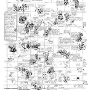 Phoenix Cactus Map hand illustrated map of cactus in Phoenix