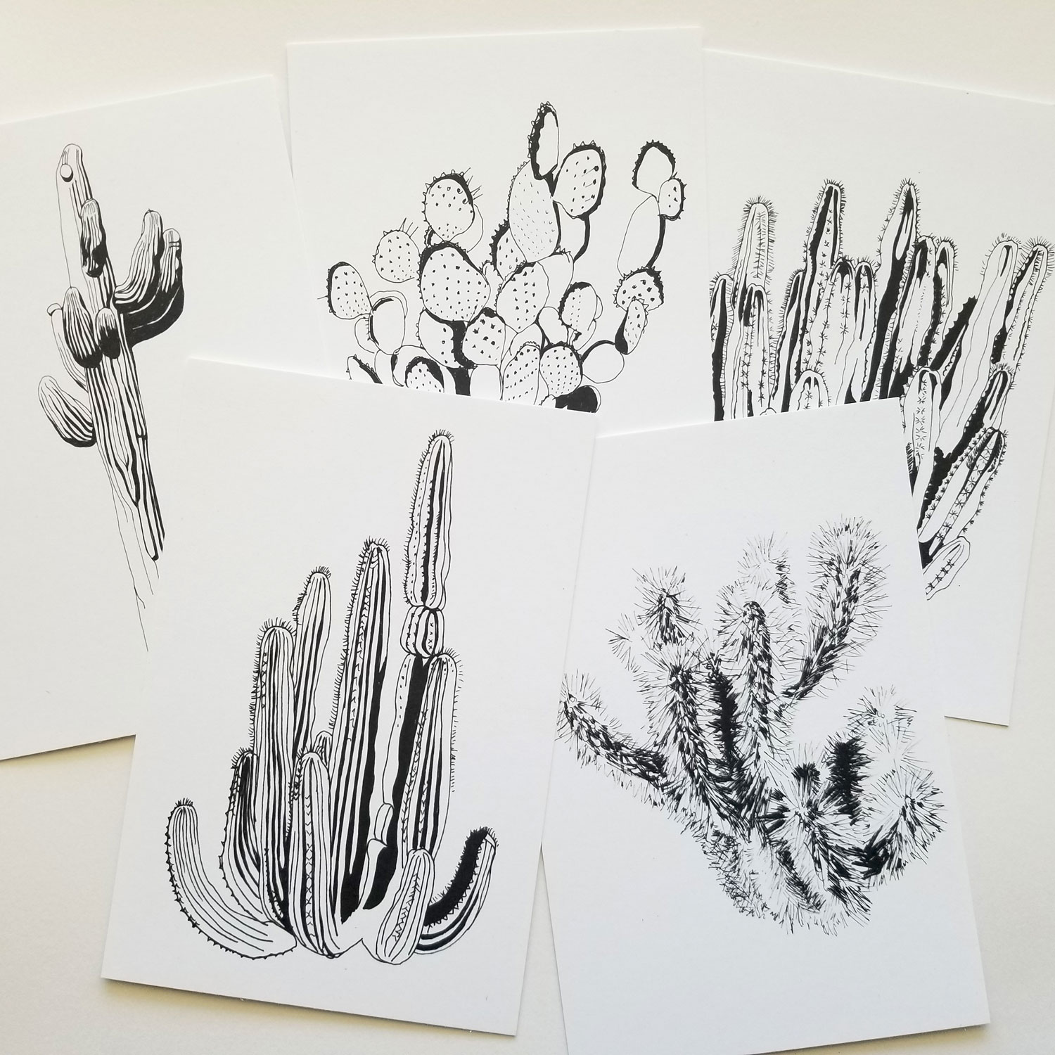 Cactus drawing of five native az cactus