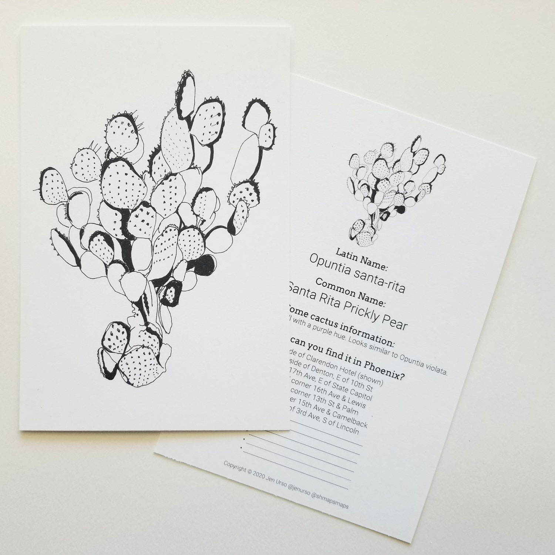 Cactus drawing of a Santa Rita Prickly Pear Jen Urso